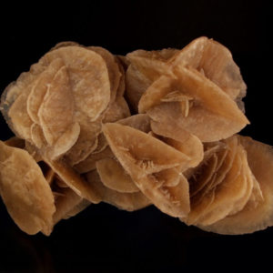 Róża Pustyni-maroko